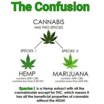 Razlika med konopljo in marihuano
